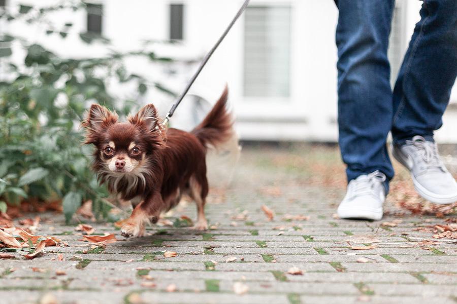 Hunde im RATIO_Land